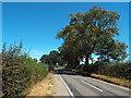 SP7367 : Brampton Lane near Pitsford by Malc McDonald