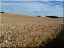 SJ9928 : Wheatfield, north of Amerton Railway by Christine Johnstone