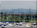 SX9588 : Motorway Viaduct over the Exe at Topsham by David Dixon