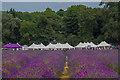 TQ2761 : Mayfield Lavender Farm by Ian Capper