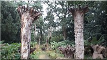 TM3996 : Raveningham Hall - entrance to the stumpery and woodland by ruth e