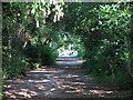 TQ1469 : The Thames Path opposite Garrick's Eyot by Mike Quinn