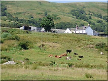 NS0670 : Cattle at Stuck Farm by Thomas Nugent