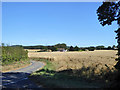 TR0253 : View towards house on Shottenden Lane by Robin Webster