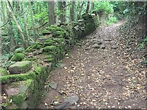 SO2220 : Wall and footpath by Alan Hughes