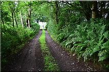 H5371 : Rough lane, Bancran by Kenneth  Allen