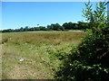 TQ5836 : Farmland on the north side of Bunny Lane by Christine Johnstone