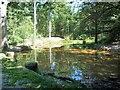 TQ5736 : Wildlife pond, Hargate Wood by Christine Johnstone
