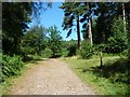 TQ5737 : Footpath junction, Hargate Forest by Christine Johnstone