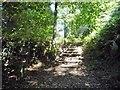 TQ5538 : Steps into Friezland Wood by Christine Johnstone