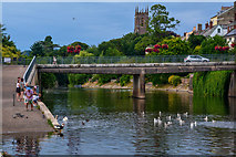 SS9512 : Tiverton : River Exe by Lewis Clarke