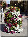 SU1429 : Floral display, Bridge Street, Salisbury by Brian Robert Marshall
