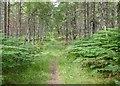 NH5650 : Spital Wood by valenta
