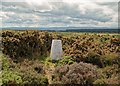 NH8257 : Carse of Delnies Trig Point by valenta