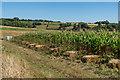 SU7817 : Farmland, Uppark by Ian Capper