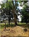 TL4349 : Newton: churchyard and Newton Manor by John Sutton