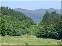 NS0372 : Power lines in Rhubodach Plantation by Thomas Nugent