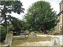 TQ1068 : The Church of St. Mary the Virgin, Church Street / Thames Street - graveyard by Mike Quinn