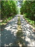 NS0275 : Path near Colintraive by Thomas Nugent