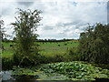 SE3268 : Water lilies, west bank, Ripon Canal by Christine Johnstone