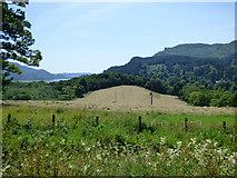 NS0082 : Field at Auchnagarron by Thomas Nugent