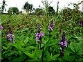 H3878 : Wild plants, Glasmullagh by Kenneth  Allen