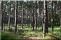 SU3014 : Woodland on Copythorne Common : Week 33