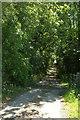 SE3074 : Park Lane at Sike Wood by Derek Harper