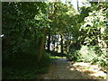 SD9350 : Path in Mill Wood by JThomas
