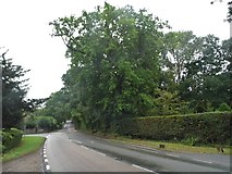 TQ2127 : The A281, Lower Beeding by David Howard