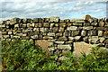 NZ7604 : Memorial stones built into wall by Mick Garratt