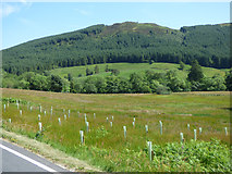 NS1181 : Saplings by the B836 road by Thomas Nugent