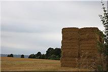 SU5128 : Field by Petersfield Road by David Howard