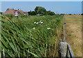 TG4326 : Grassland next to Waxham Road at Sea Palling by Mat Fascione