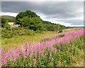 NJ6408 : Shepherd's Croft near Rinalloch by Stanley Howe
