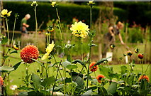SX4268 : Cutting garden at Cotehele by Jonathan Billinger