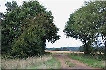 SU7723 : Field entrance on the A272, Durleighmarsh by David Howard