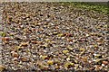 TQ8567 : Lower Halstow: A foreshore comprising mainly of broken weathered bricks by Michael Garlick