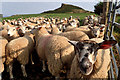 NZ5711 : V-ewes of Roseberry by Mick Garratt