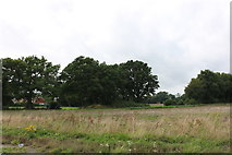 SU9822 : Common by Horsham Road, Petworth by David Howard