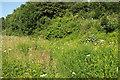 SX9066 : Flowers in Nightingale Park by Derek Harper