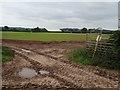 SJ7710 : Farmland near Woodside Farm by Philip Halling