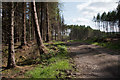 NZ1454 : Forest road in Pontop Low Wood by Trevor Littlewood