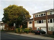 TQ1672 : Ashburnham Road, Ham by David Howard