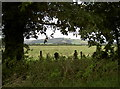 ST3752 : Rural view from Chapel Road by Neil Owen