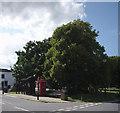 TF2157 : Trees in Tattershall by Bob Harvey