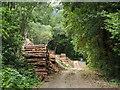 SH6918 : Timber stacks beside forest road by Trevor Littlewood