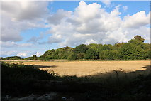 SU4535 : Field by the A272, South Wonston by David Howard