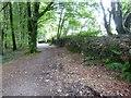 SS6140 : Hedgebank boundary to woodland at Arlington COurt by David Smith