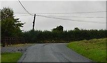 N1464 : Abbeyderg by N Chadwick